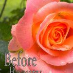[PDF] [EPUB] Before Beauty Download