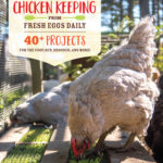 [PDF] [EPUB] DIY Chicken Keeping Projects from Fresh Eggs Daily: 40+ Fun Step-by-Step Building Ideas for Your Coop, Run, and Brooder Download