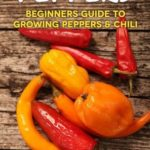 [PDF] [EPUB] Home Grown Peppers: Beginners Guide To Growing Peppers and Chili Download