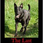 [PDF] [EPUB] The Last Highlanders (The Jacobite Spirit #1) Download